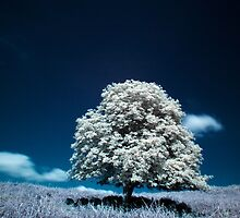 Tree (IR) by PaulBradley