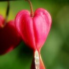 My Heart is Pure by TriciaDanby