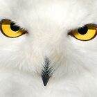 Snowy Owl by Angus Russell