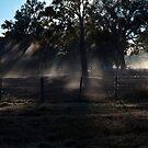 Misty Morning by John Vandeven
