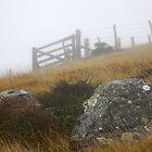 Farm Gate - Onuku, Banks Peninsular, New Zealand by Ruth Durose