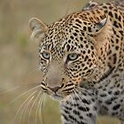 Leopard - Masai Mara National Park by Kevin Bedford