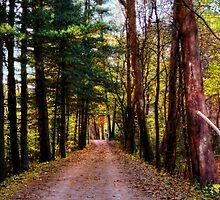 Tunnel of Trees  by Marcia Rubin