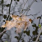 Leaf in the water by soffee12