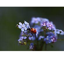 Ladybird... Photographic Print