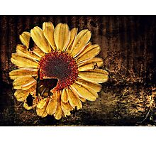 Floral Decay # 2 Photographic Print
