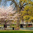 Spring in Boston Public Garden by Monica M. Scanlan