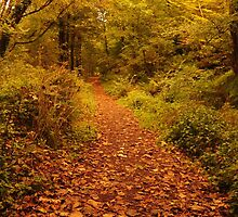 Autumnal woodland scene, Bute, Scotland by James1980