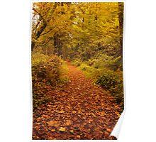 Autumnal woodland scene, Bute, Scotland Poster