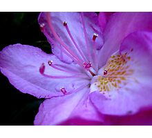The inner workings of a flower  ^ Photographic Print