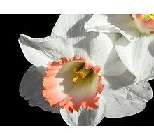 Pretty Daffodil ©  Photographic Print