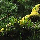 Forest deep by su2anne