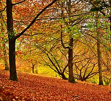 Chasing Autumn by Briony  Williams Photography