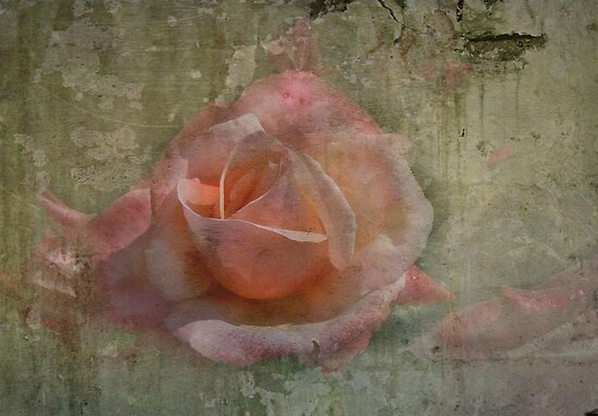 Faded Rose by Trevor Kersley