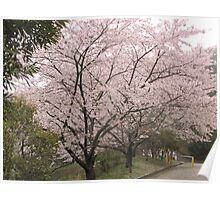 Cherry Tree in Rain #1 Poster