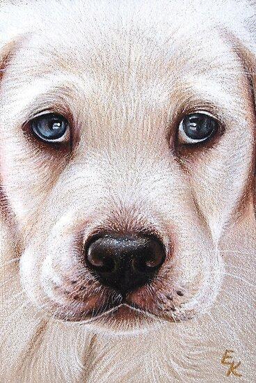 Lab pup by Elena Kolotusha