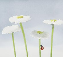Daisies4you.. by Yool