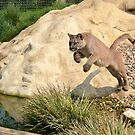 Leaping Puma... by ElsieBell