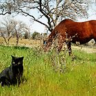 Mustang and Friend by Corri Gryting Gutzman