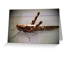 Little Weed Hopper Greeting Card