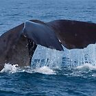 Whale Tail by Cathy  Walker