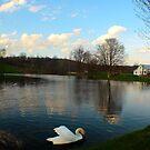 Swan Pond by Melissa Ann Blair