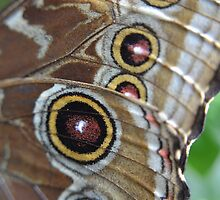 Blue Morpho at the Science Center by Kate Farkas