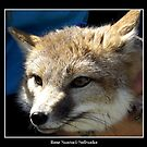 Swift Fox by Rose Santuci-Sofranko