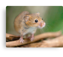 Happy Harvest Mouse Metal Print