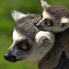 Ring-tailed Lemur with Baby by Jo Nijenhuis