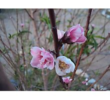 Happy Blossoms Photographic Print