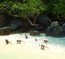 Monkey Beach by Margaret Stevens