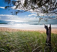 """Early Morning"" Shelly Beach, Caloundra by Heather-Lee Reid"