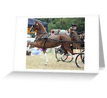 The High Stepper Hackney Horse Portrait Greeting Card