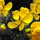 Yellows In Bloom by eq29
