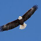 Bald Eagle by Larry Trupp