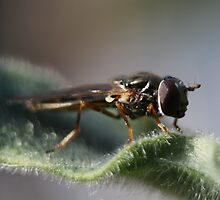 the face of a bug by yampy
