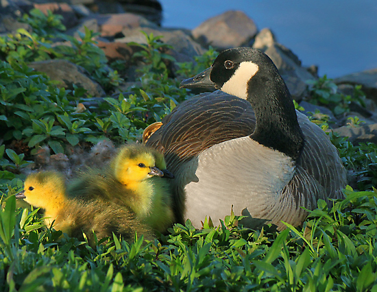 Proud Momma by Lanis Rossi