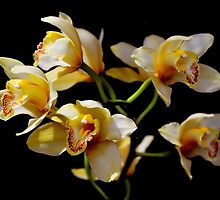 Yellow and white flowers on black by Steve