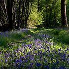 Spring woodland by Jennifer Bradford