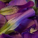 Violets by Karen Kaleta