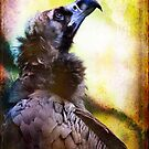 Cinereous Vulture seaking meaning by alan shapiro