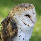 Barn Owl by Alyce Taylor