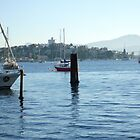 Early morning marina in Hobart Derwent River - panorama   by lighthousecove
