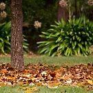 Yackandandah Autumn Series ~ Park In Square by Jane Keats