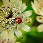 Flower and Ladybird by Karen  Betts