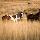 In Tall Grass by Mike Hendren