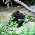 Gorilla by Robert  Miner