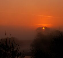 Silhouetted Gold by Simon Pattinson
