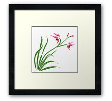 Chinese Orchade Framed Print